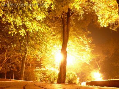 Парк Доброму Гению в Феодосии. Каштаны в лучах фонаре