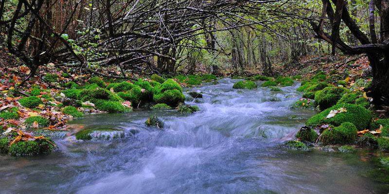 Река Бельбек: особенности, животный мир, фото